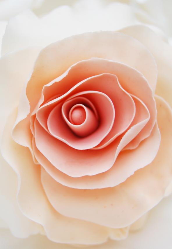 Sugar Craft Rose 2